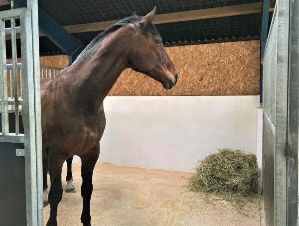 Hestestrøelse -ewers træpillesmuld-hest i boks med strøelse